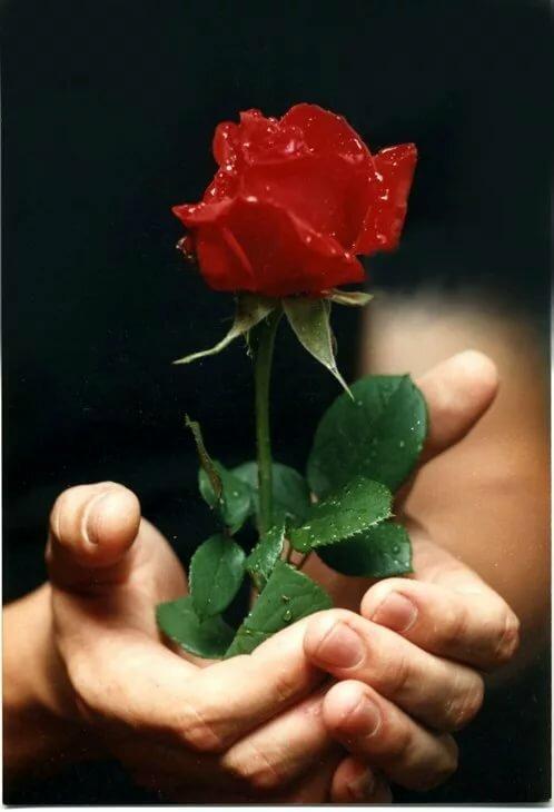 Днем рождения, открытки дарю тебе цветы