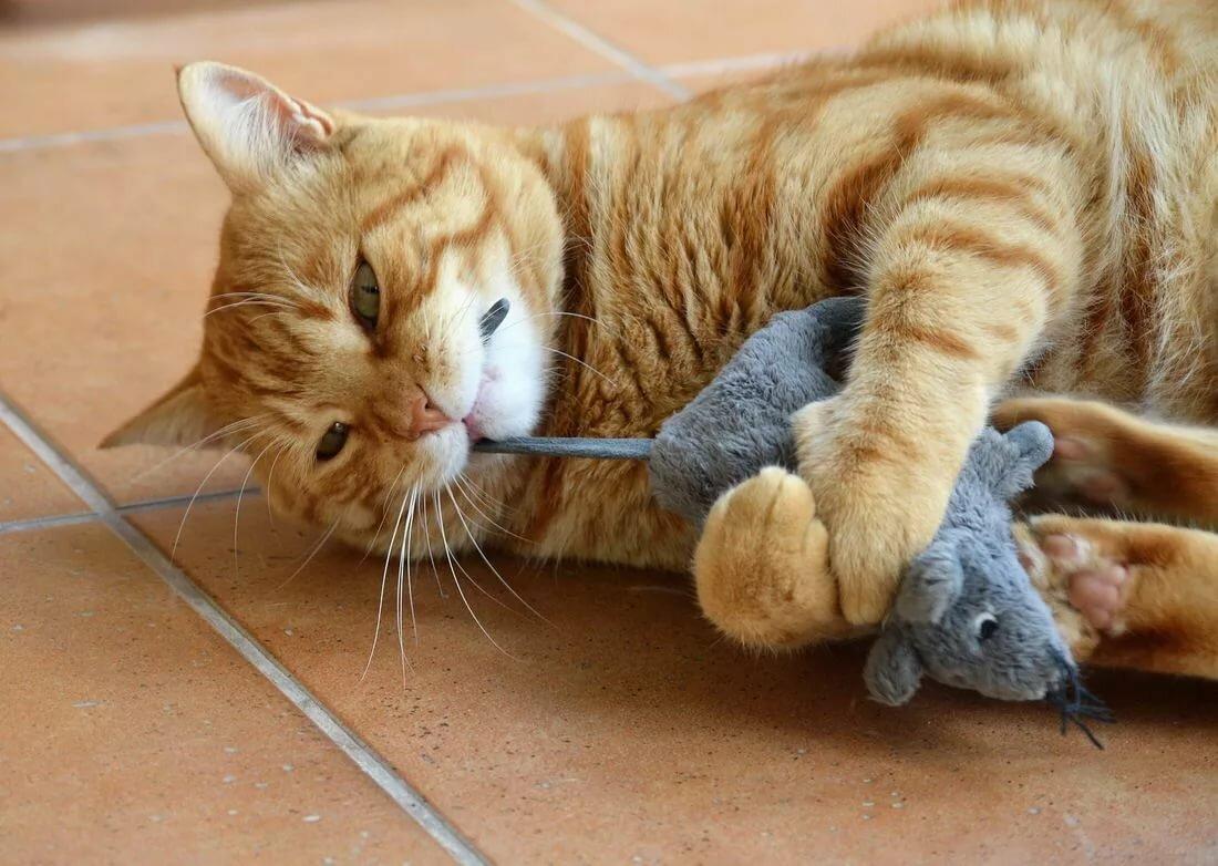 Смешные прикольные картинки с котами, картинки молись картинки