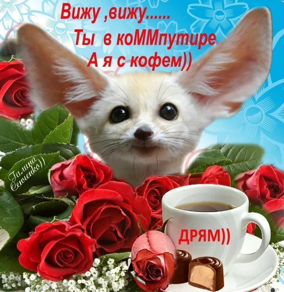 ходу утренние пожелания с добрым утром картинки животные смешные с пожеланиями интернете такие восторженные
