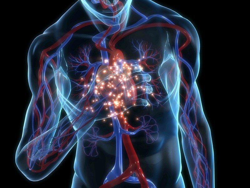 Картинки сердца в теле