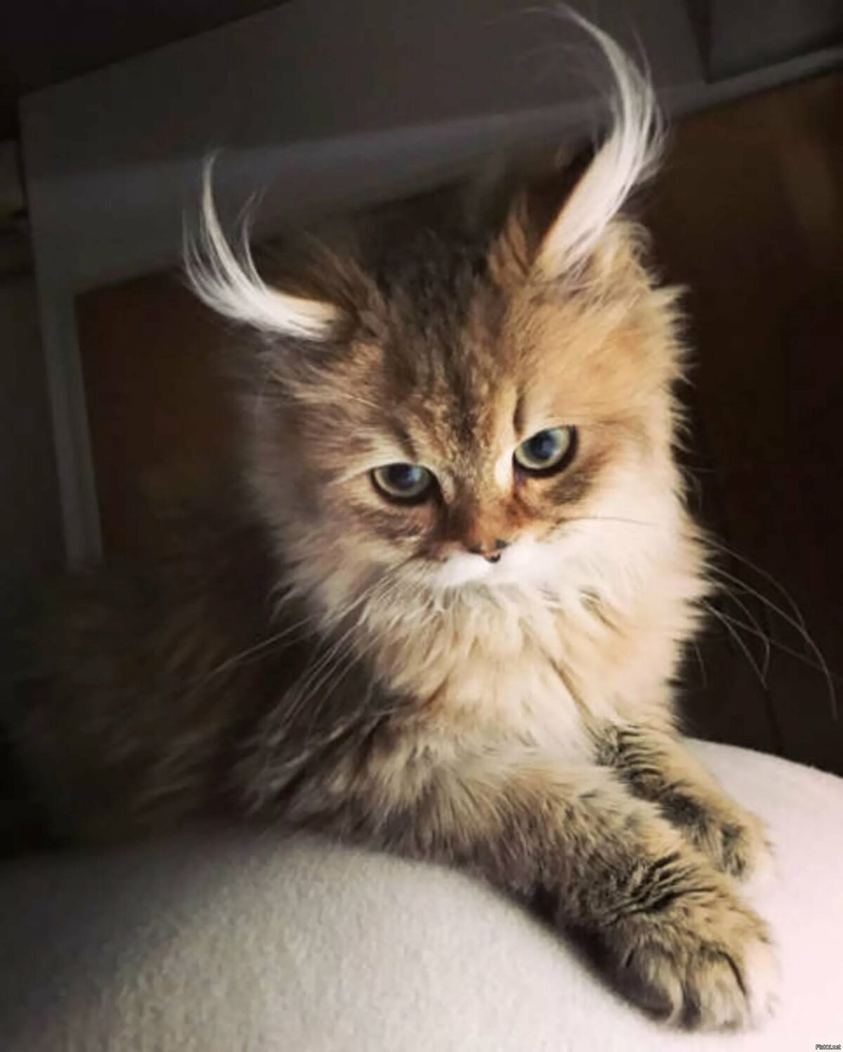 Картинки самые смешные кошки в мире