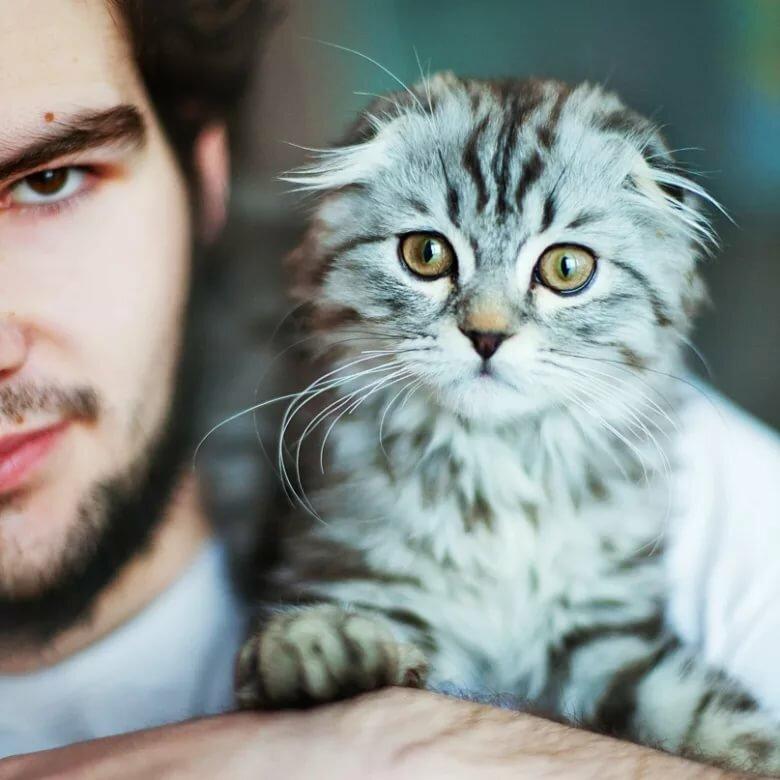 Картинки парней котов