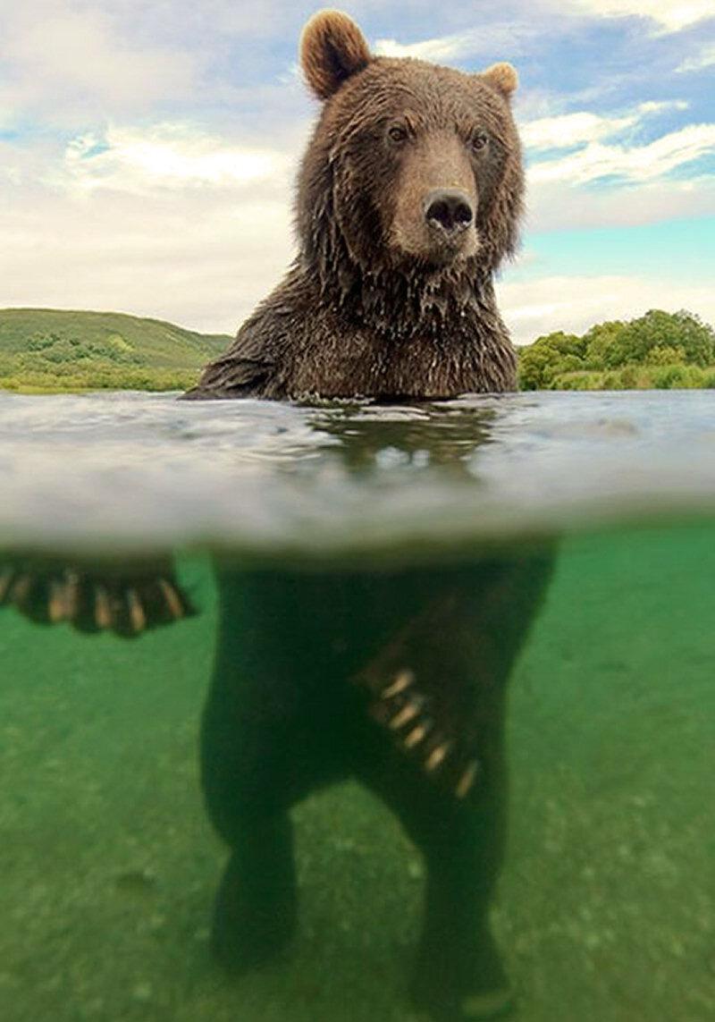 Прикольные картинки медведь россия, поздравляю днем