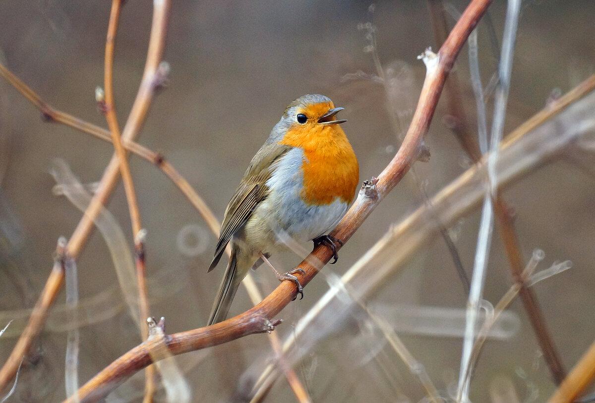 фото птиц москвы и подмосковья с названиями то, что возраст