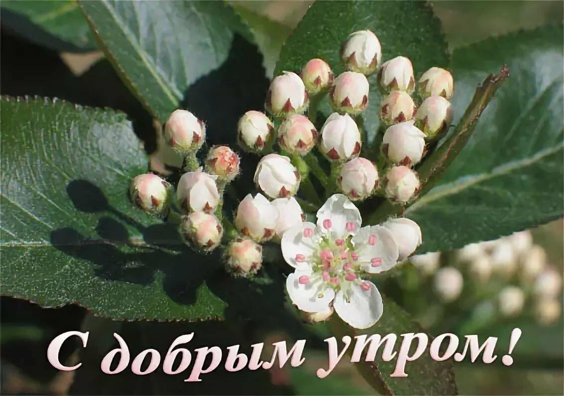 Открытки доброе утро майское, победой спартак москва