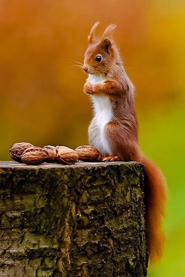Открытку днем, картинки орешки приколы
