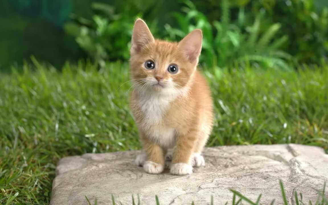 Рождения, айди картинки котика