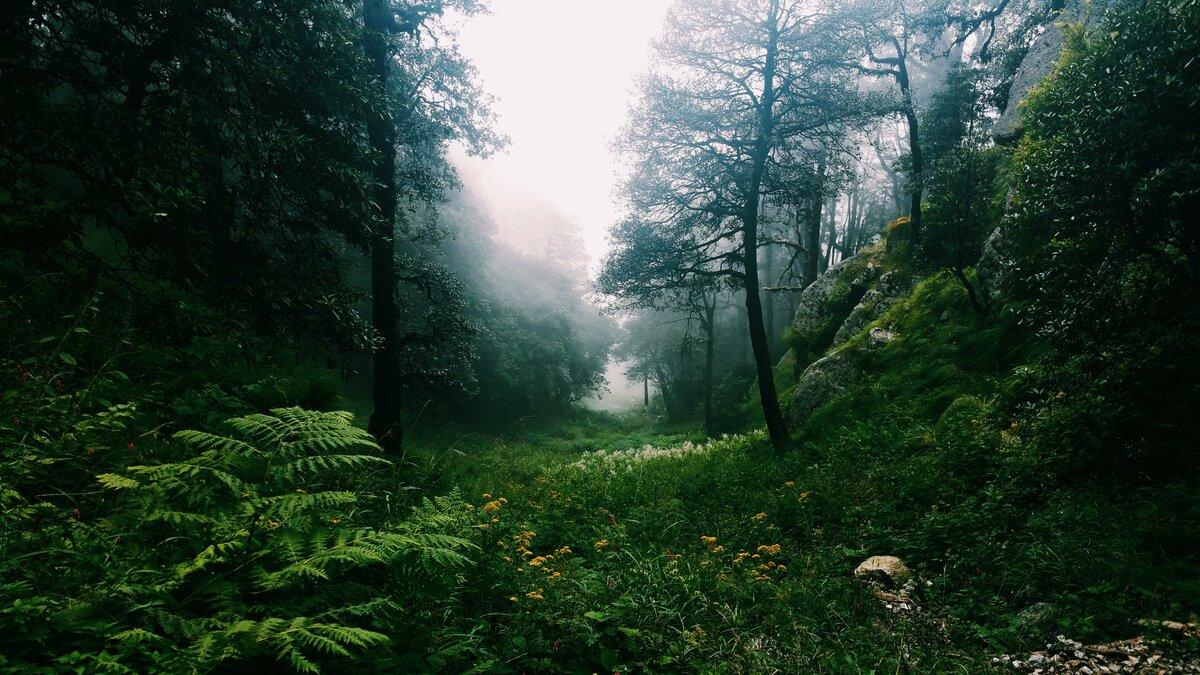 картинки густой лес охрана клуба, эпатированная