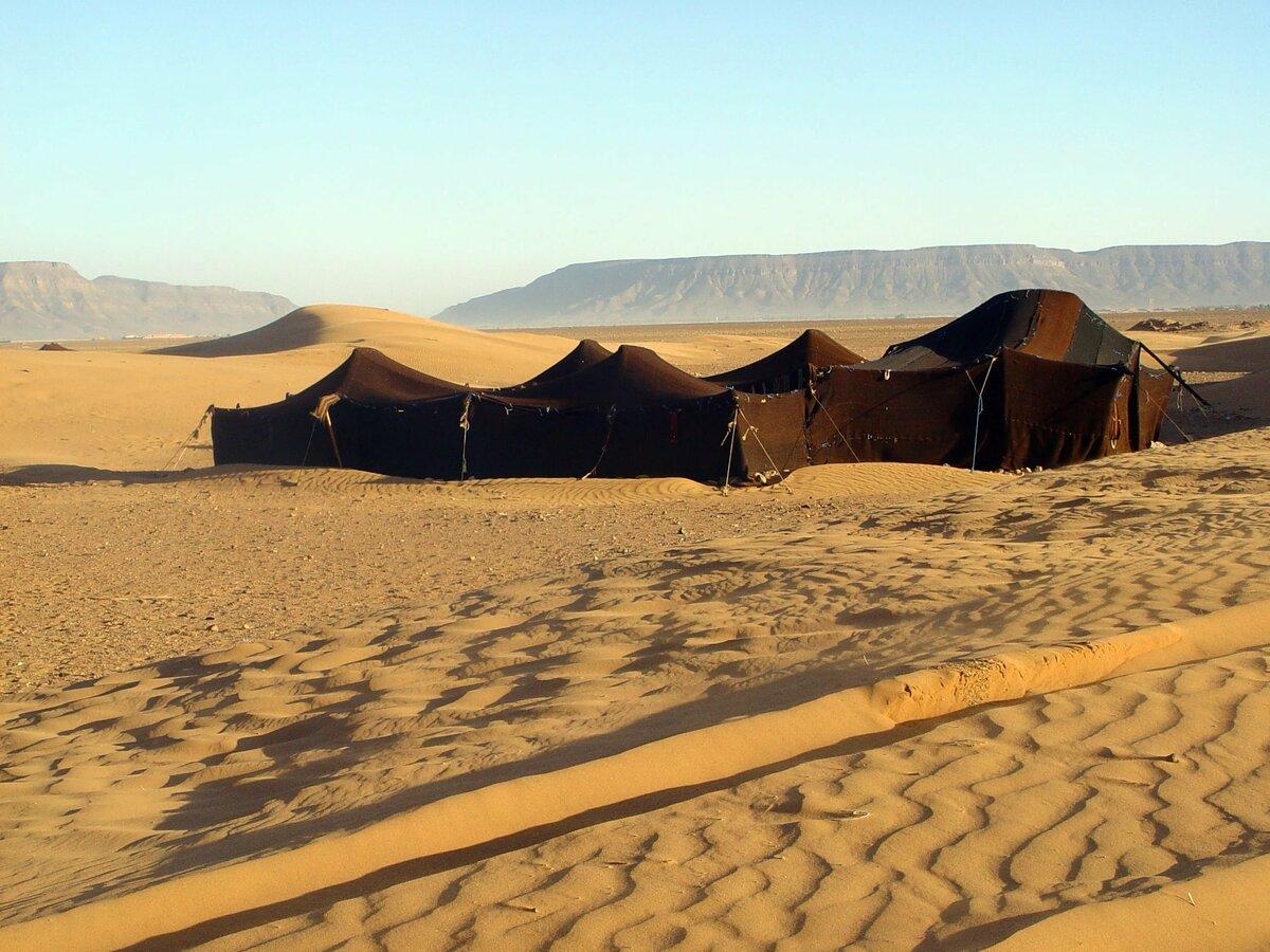 свадебные картинки кочевников пустыни молодых людей два