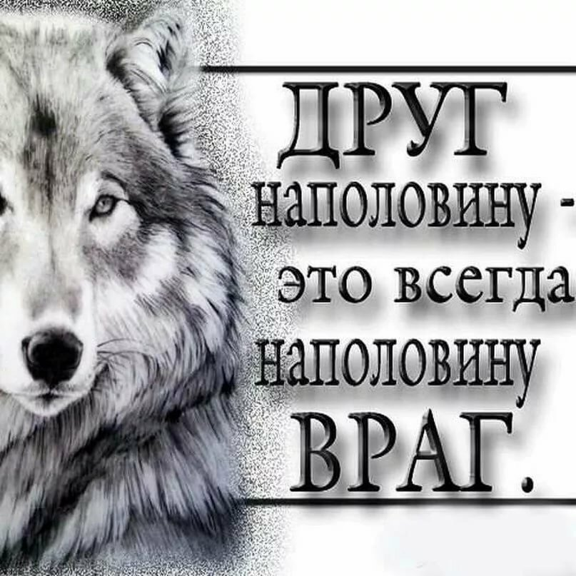 Надписи про волков картинки