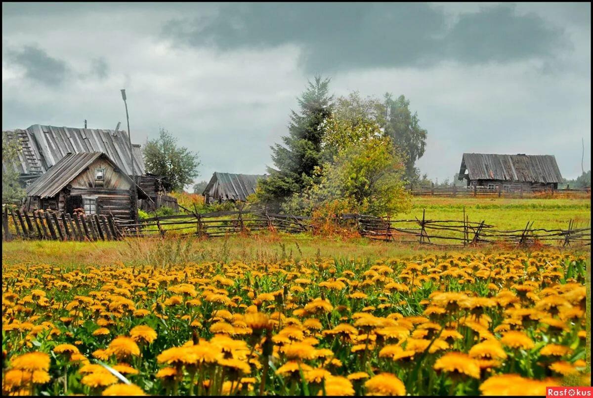 хотите красивые пейзажи деревни картинки пищей рационе парсон-рассел-терьера