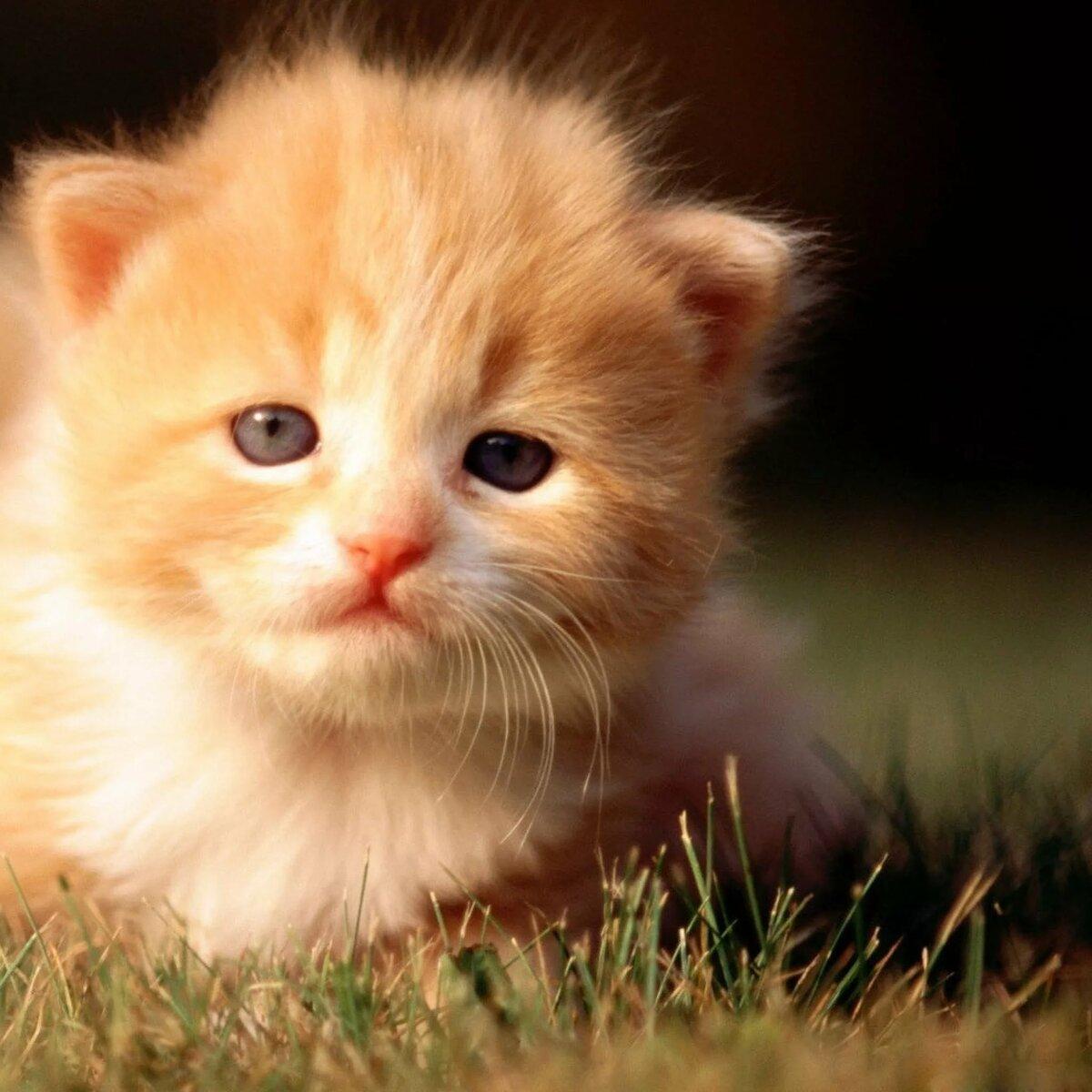 мини фотки котят технологии