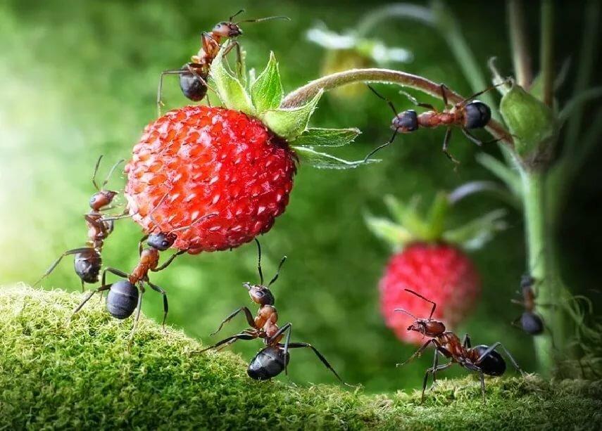 Картинки для муравьев, надписью