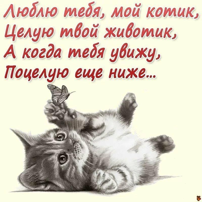 Картинки с котиками красивые с надписями любимому мужчине, открытки