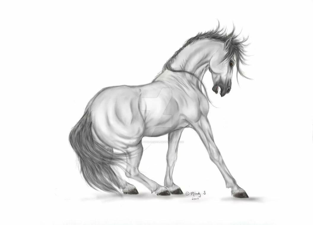 Чемпионат, крутые картинки лошадей для срисовки