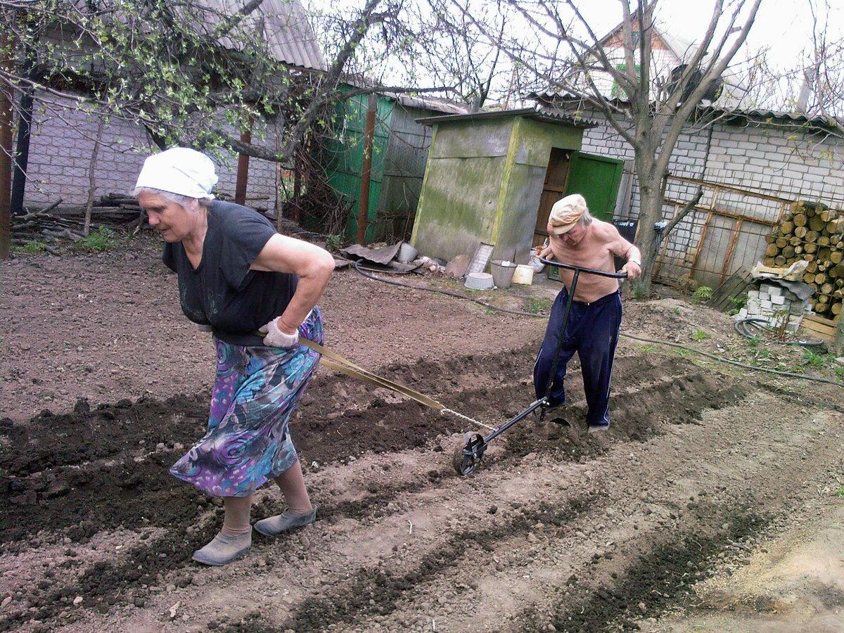 Картинки смешные о работе на огороде