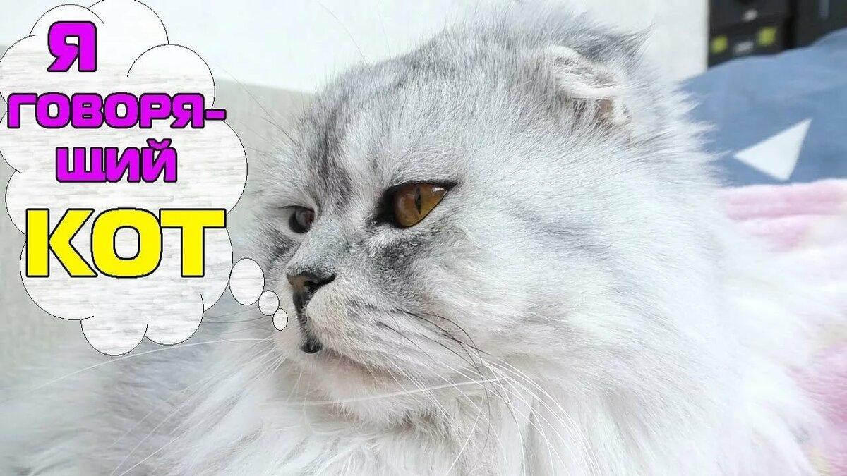 Картинки киеве на кота из из видео лепота тв
