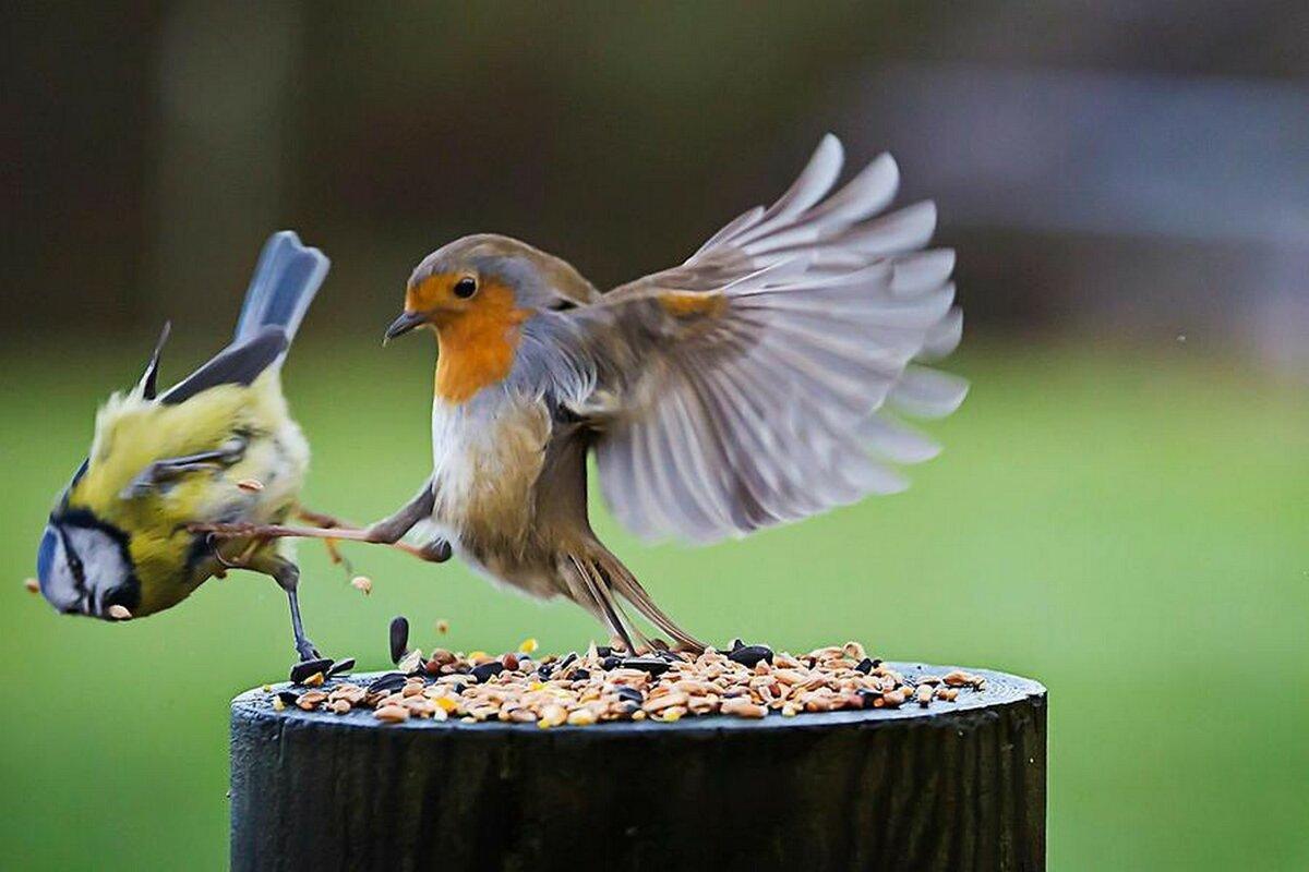 Открытки свадебные, птицы в смешных картинках