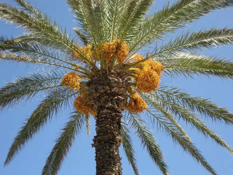 Растения в тунисе картинки