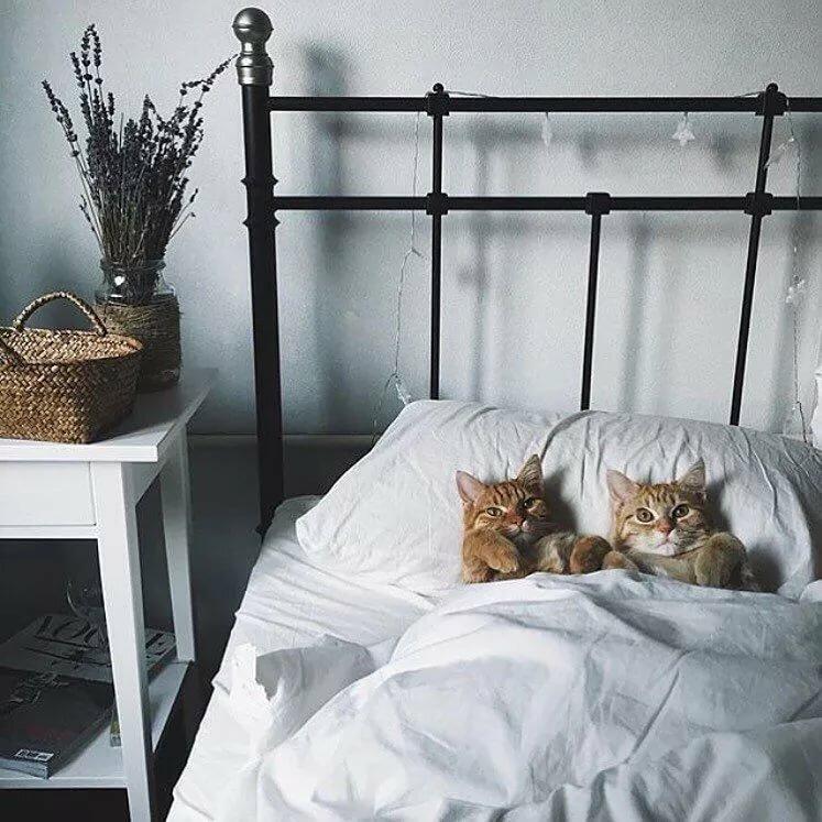 Про звездочку, прикольная картинка кот на кровати
