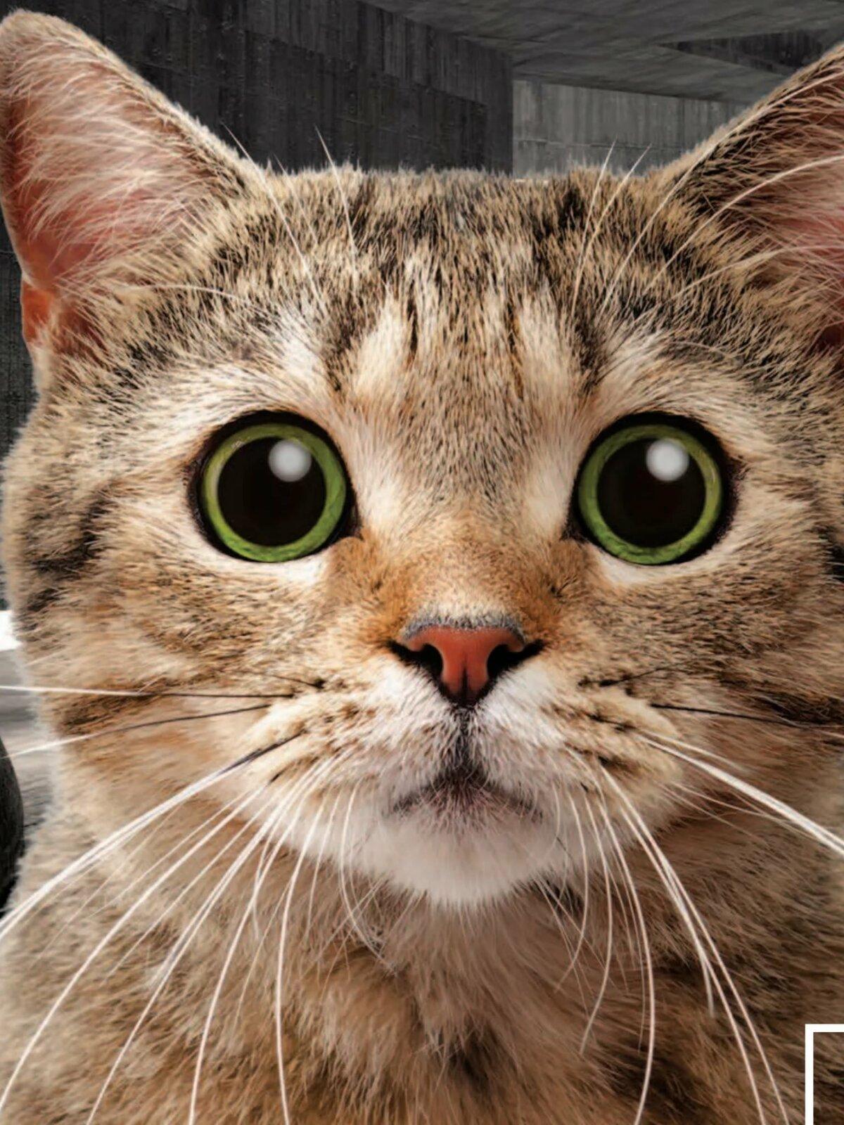 Картинка кот глаза в ушах без подписи
