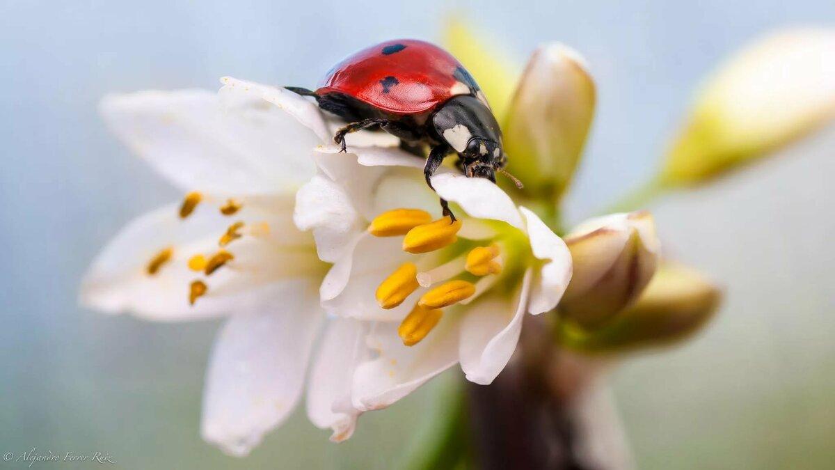 Картинки растений и насекомых