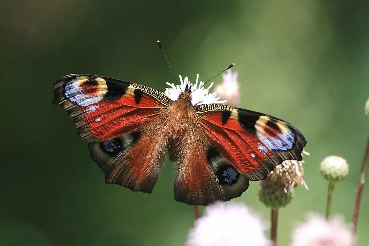 Картинка картинка бабочек