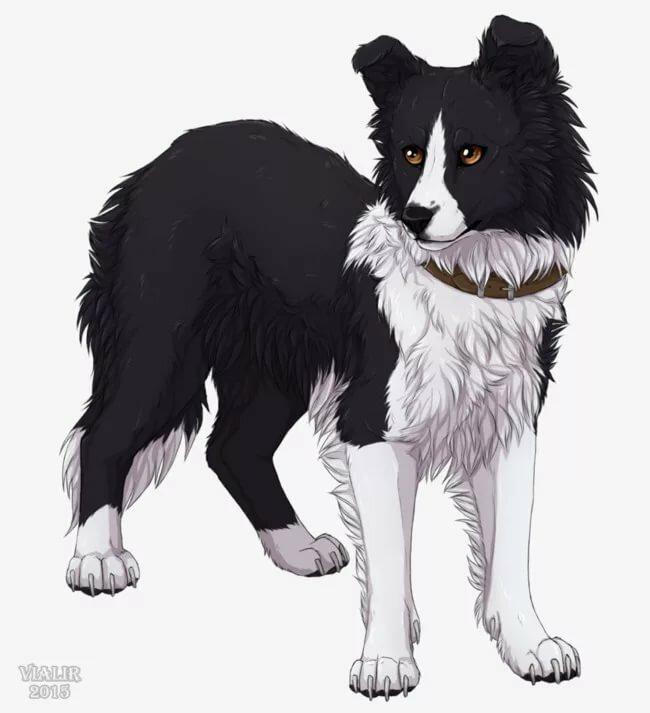 картинки собаки воители