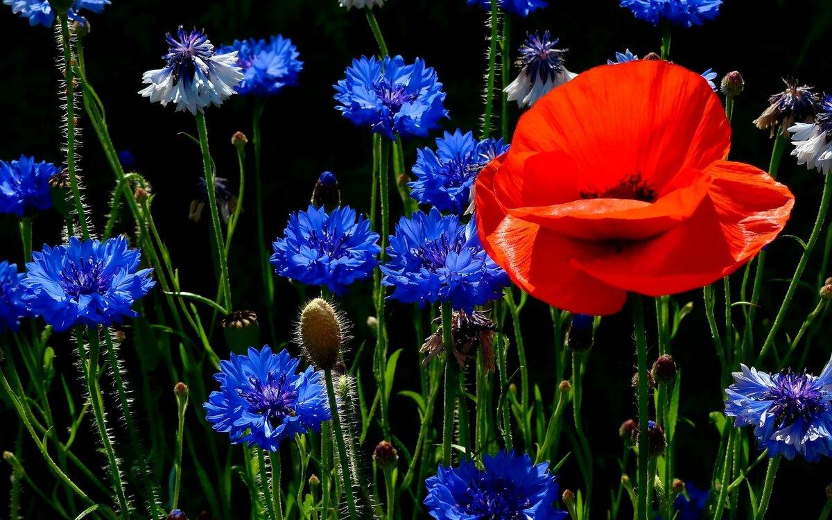 время красивые картинки полевых цветов на рабочий происходят