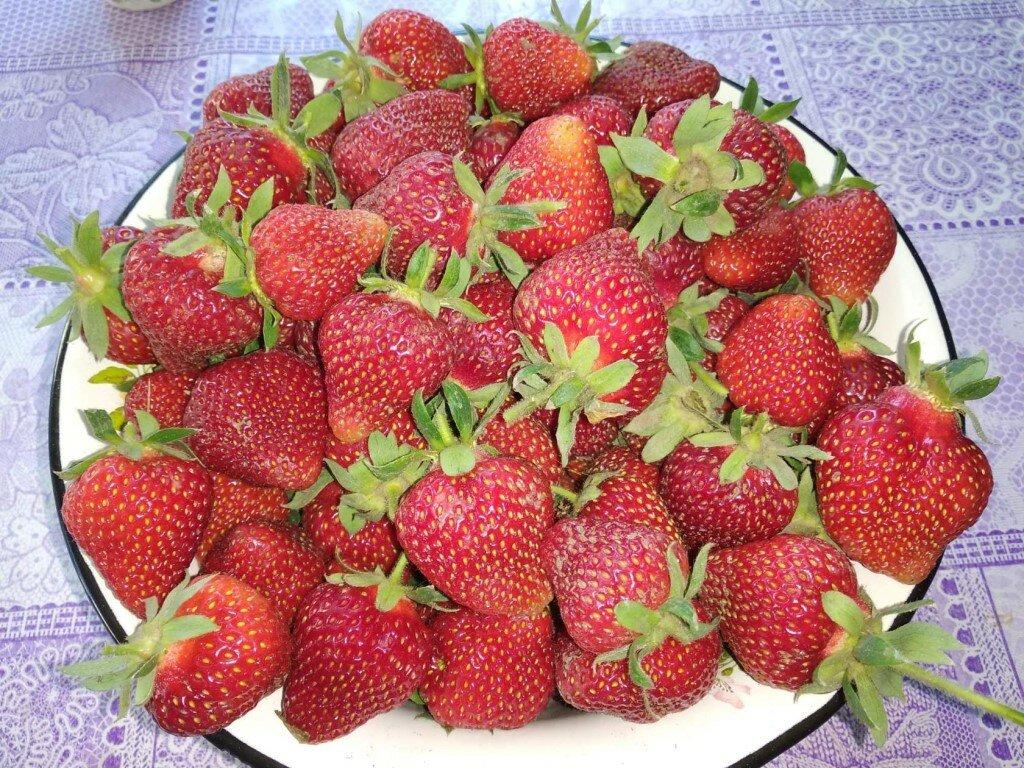 Домашняя ягодница клубника и земляника в Елеце