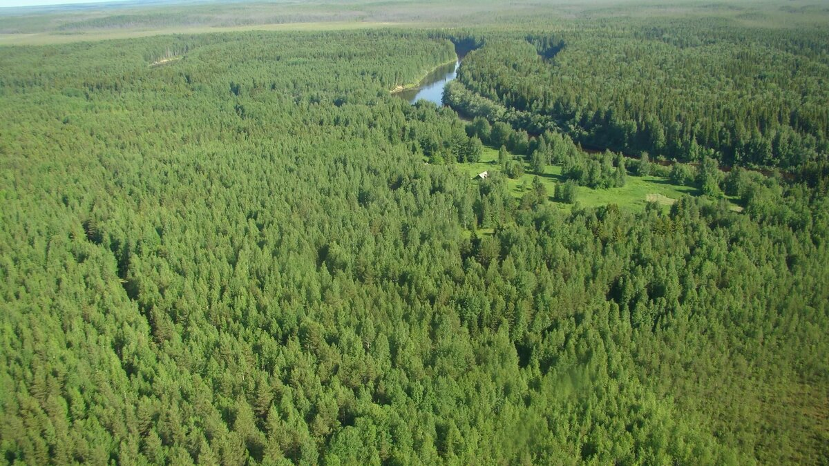 Картинки леса с самолета