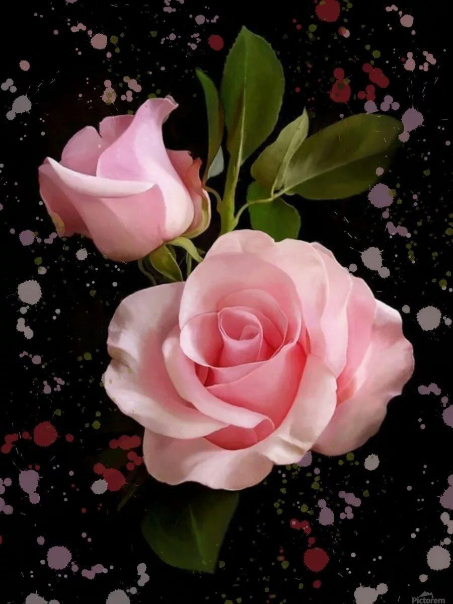 Картинки на телефон анимация розы
