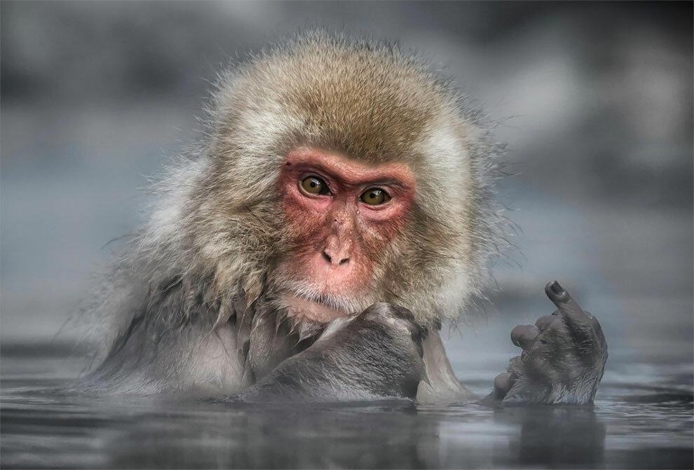 Прикольные картинки с животными видео