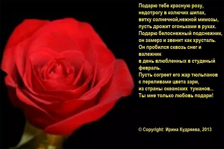 легкими красные розы стихи короткие аквариум