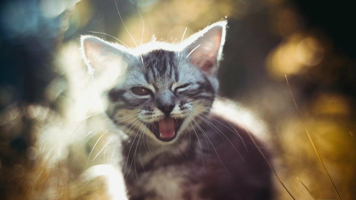 Котик радостный картинки