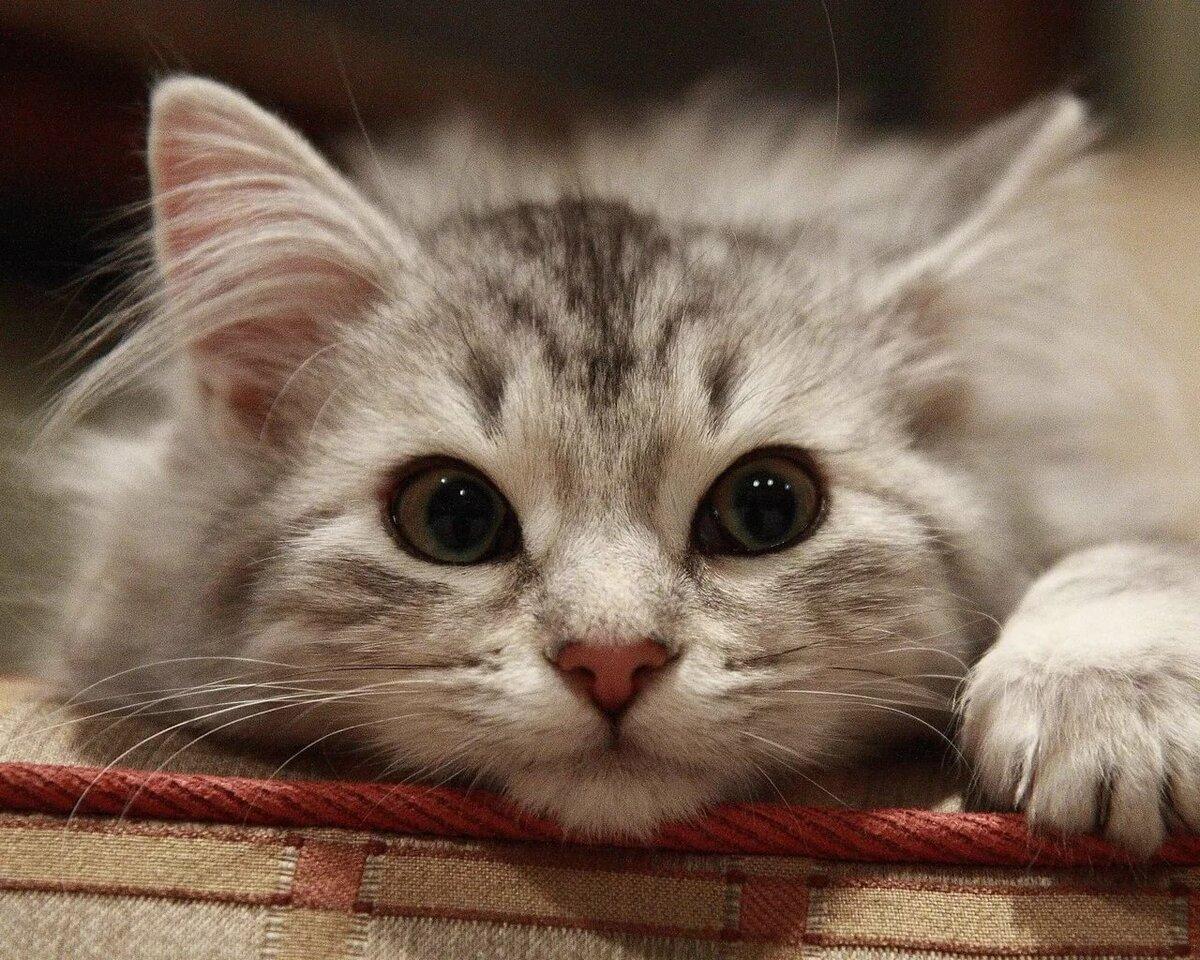 Анимации, классные картинки котят
