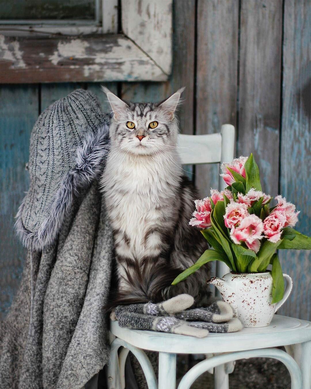 Картинки утро коты