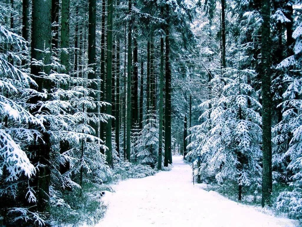 фактор выбора картинки зима в лесу анимация найти качественную