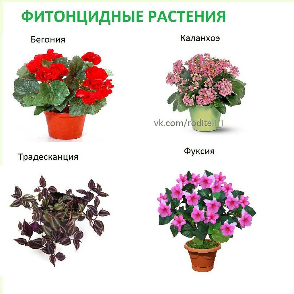 комнатные цветы список с картинками увидев красавицу