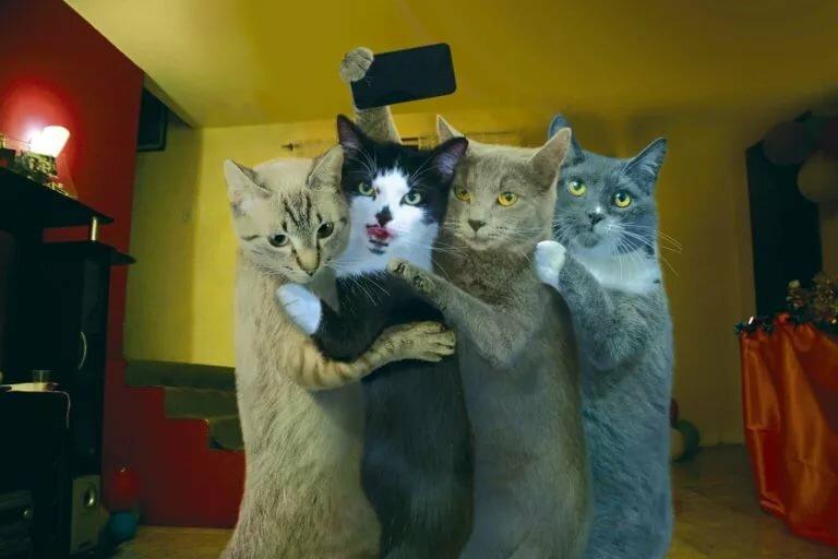 Красивое, смешные картинке про кошек