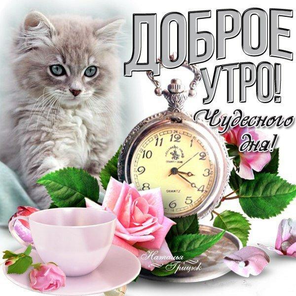 Картинки с котами доброе утро прекрасного, самому