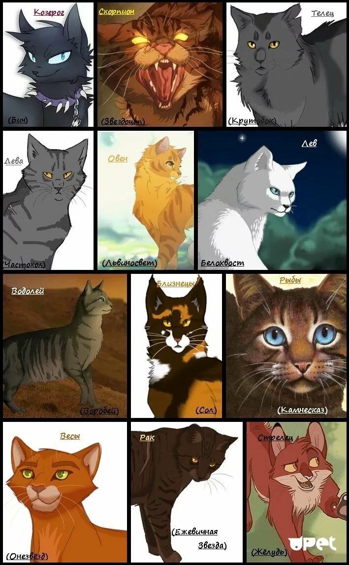 Все картинки с котам-воителям