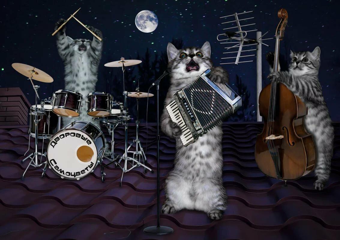 поющие коты открытка один