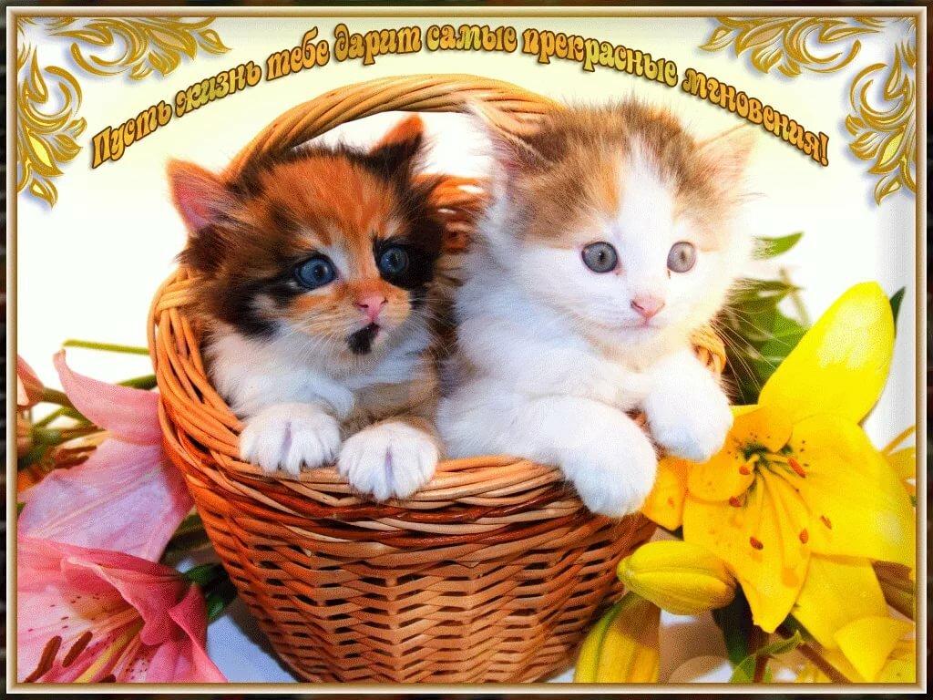 Английскими надписями, открытки хорошего дня котенок