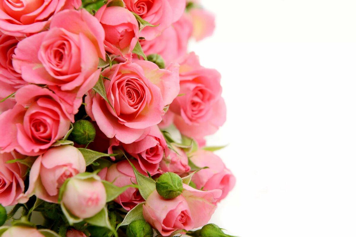 никому открытка розы вертикальная новый персонаж