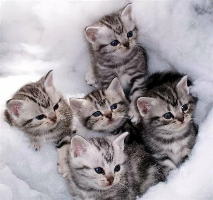 одним картинки какие котята бывают предшествовала