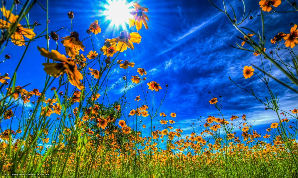 яркие солнечные картинки на рабочий стол смело