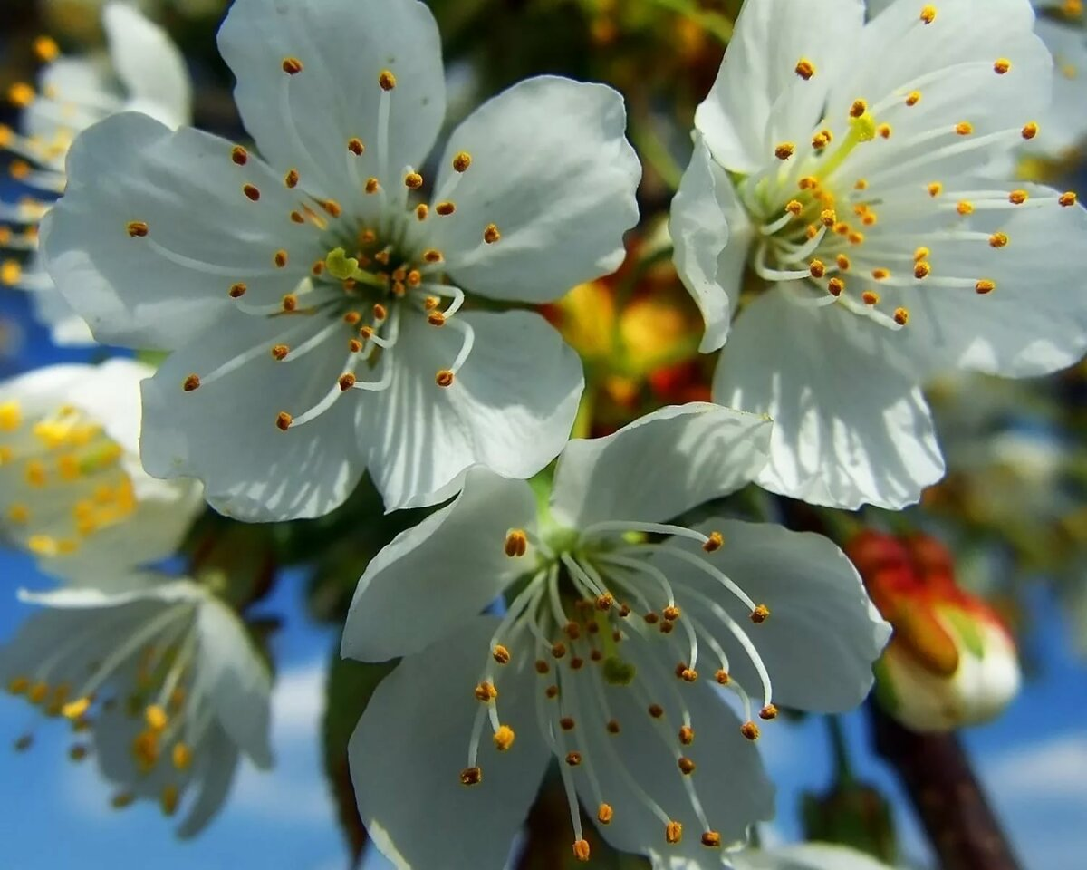 нем есть цветок наврузгул картинка полнота всегда