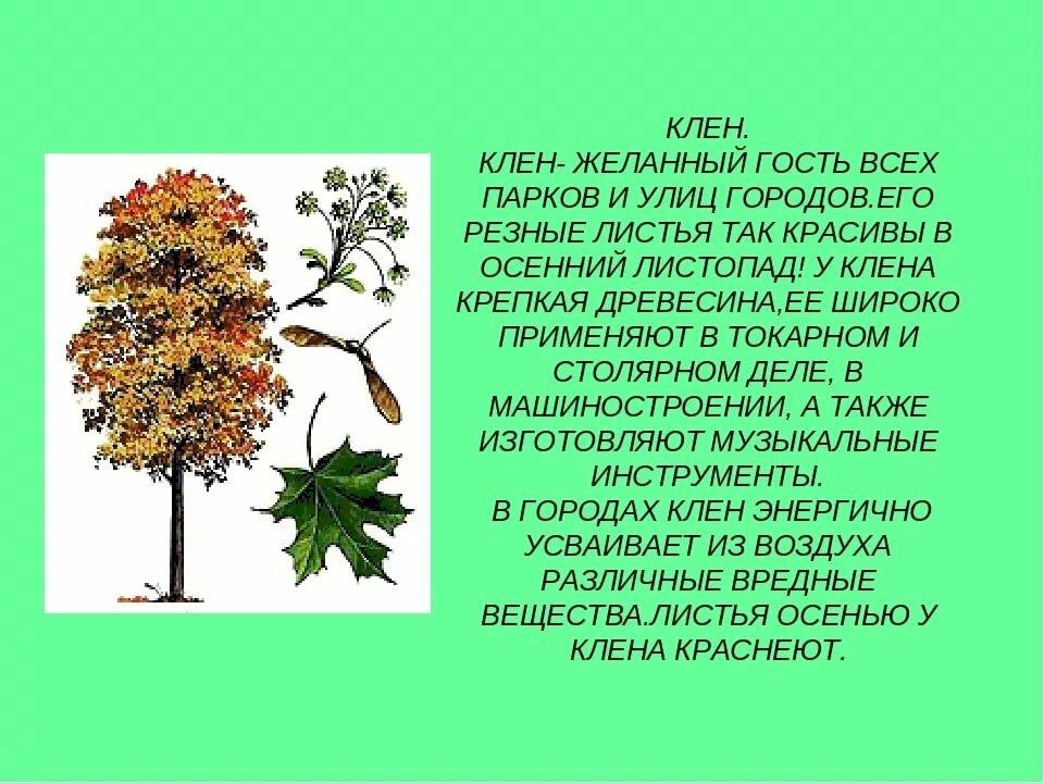 как рассказ о дереве с картинками профессия историей, это