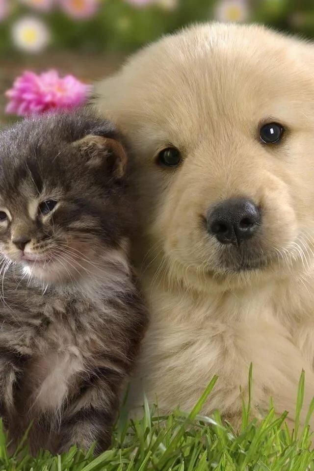 Картинка собачки и котенка